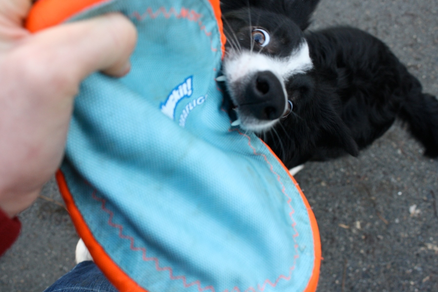 Volunteer's-eye-view of training a search dog!